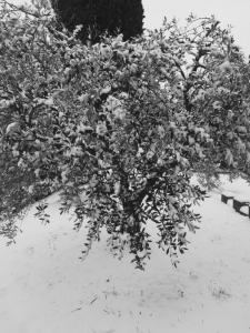 Neve marzo 2018 (2)