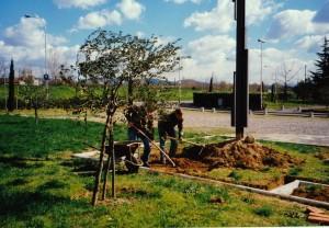 Croce park1